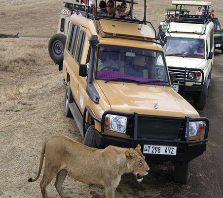 lions in ngorongoro crater seen my happy tourists ©bushtreksafaris