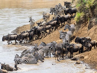 The Great Migration Safari - Maasai Mara