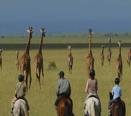 Horse Riding Safari Giraffe