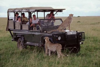 Season Special Family Safari