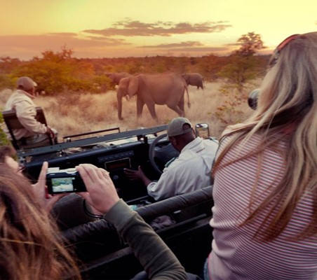 a bushtreksafari Maasai-mara evening game drive close encounters with elephants in the bush private game safari